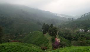 Boh Tea Plantation, Cameron Highlands