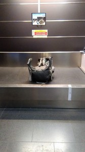 Lonely Backpack!